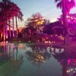 pool pink light palm tree