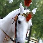 Asian Wedding Planner 44 horse entrance