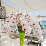 abroad orchid arrangement